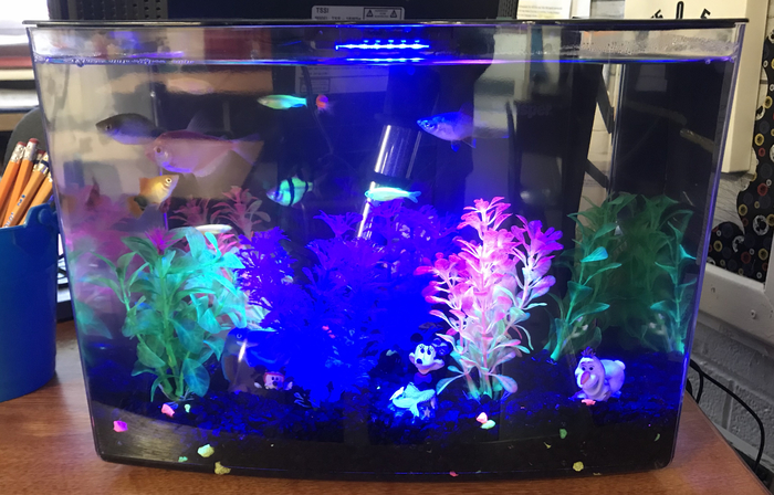 We have 4 Mickey Mouse platies and 6 Glo fish tetras.