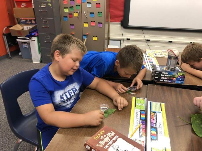 5th grade students examining leaves with a hand lens.