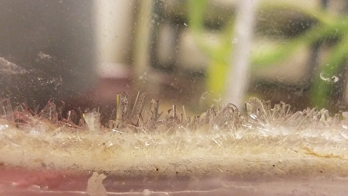 salt crystals growing in tank